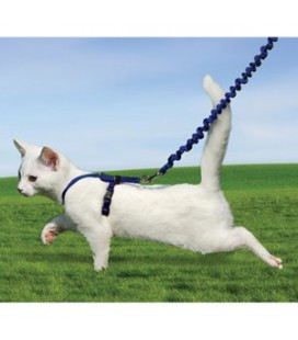 EASY WALK HARNAIS & LAISSE CHAT M BLEU