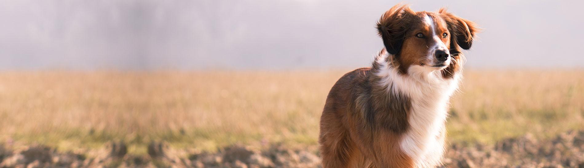 Importateur & grossiste pour nourriture et accessoires pour animaux de compagnie Nourriture chien & chat