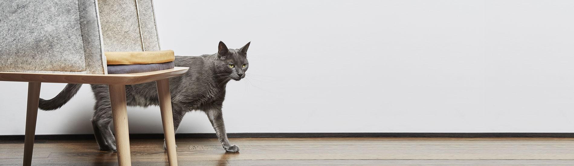 fabrication et la vente de compléments allimentaires vitaminés pour chiens & chats